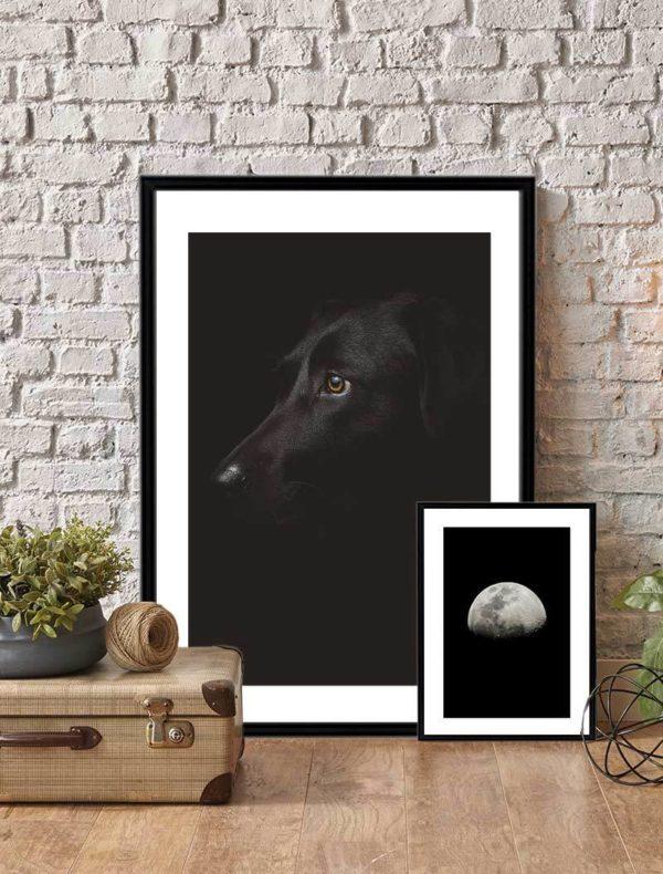 Conjunto Lámina Perro Negro