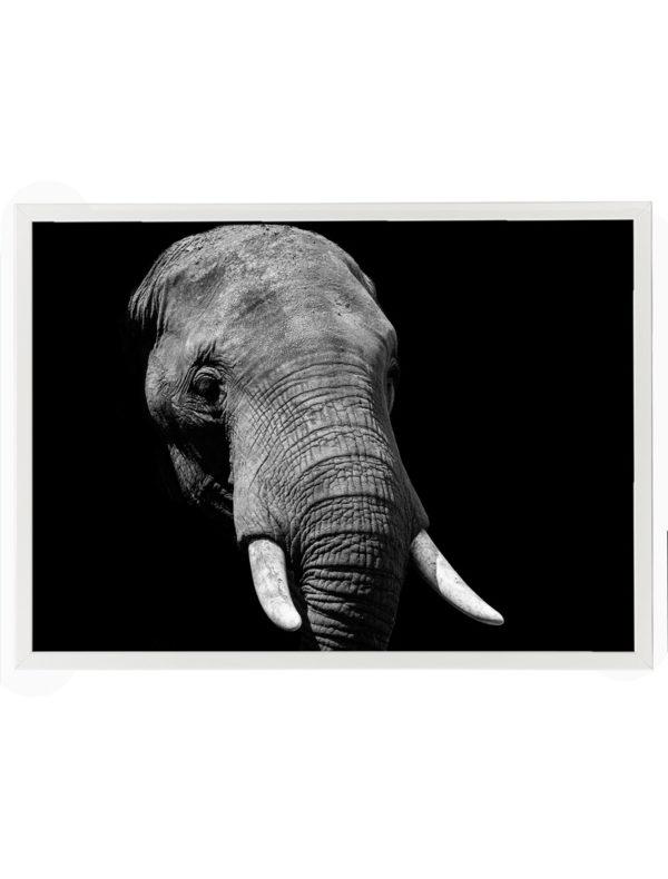Lámina Elefante Marco Blanco