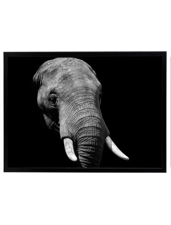 Lámina Elefante Marco Negro