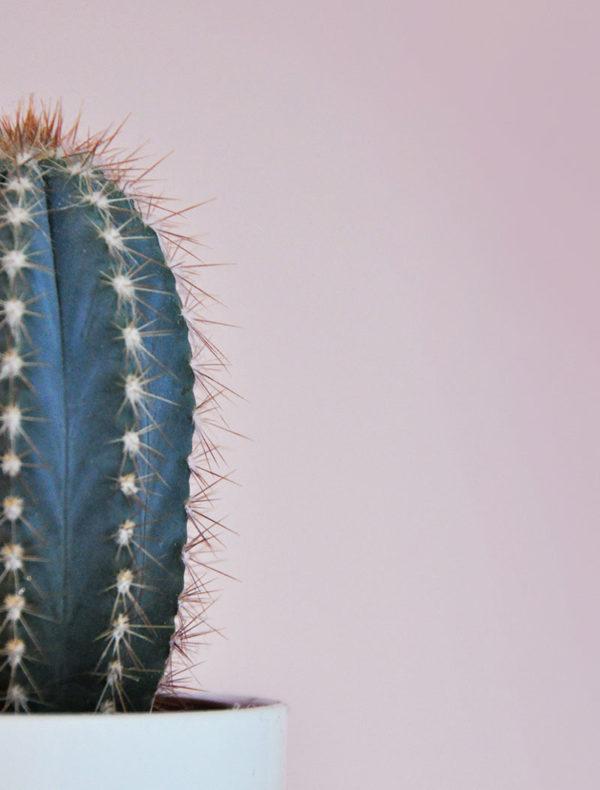 Lámina cactus