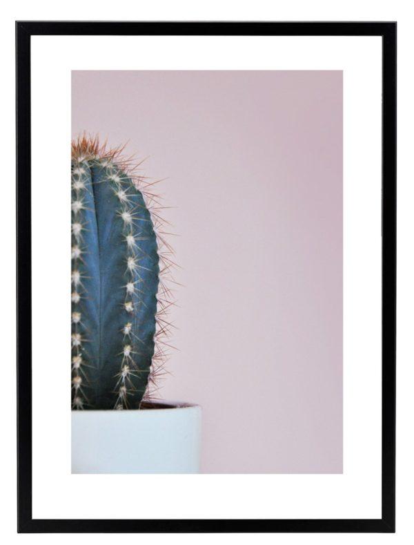 Lamina Cactus Marco Negro