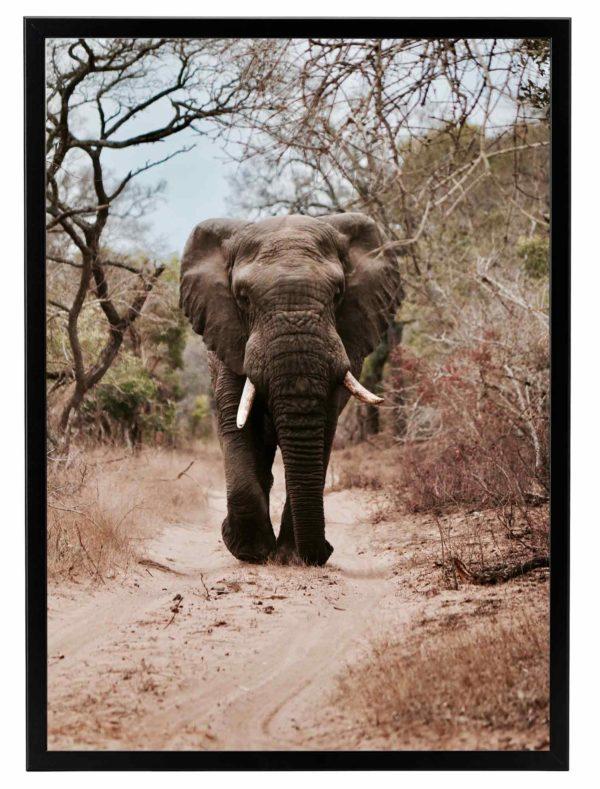Lámina Elefante Safari Marco Negro