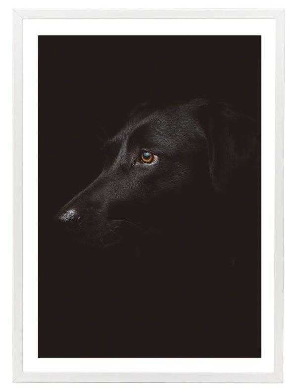 Lámina Perro Negro Marco Blanco
