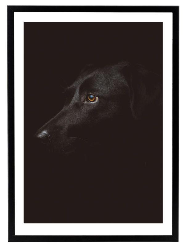 Lámina Perro Negro Marco Negro