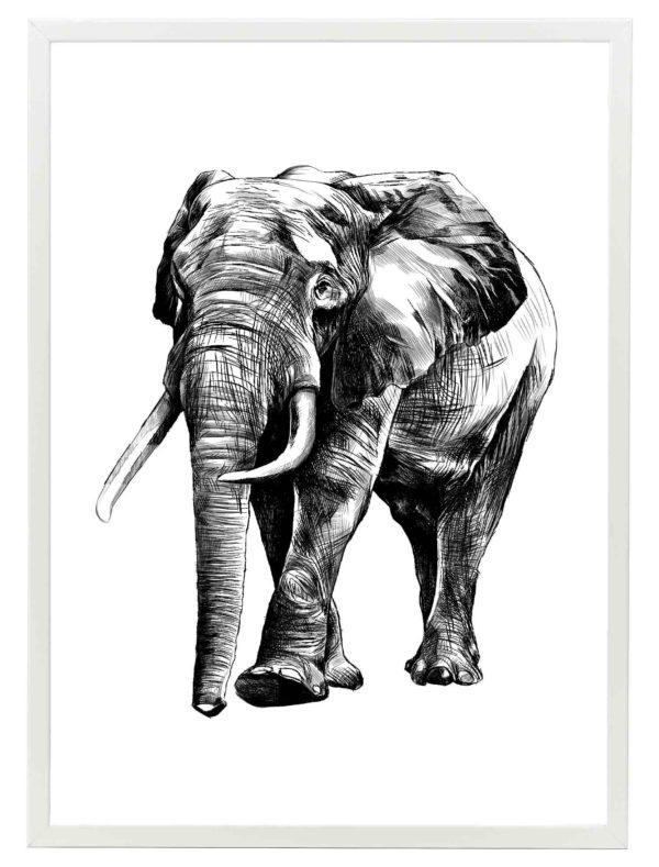 LAMINA-ELEPHANT-DRAW-MARCO-BLANCO