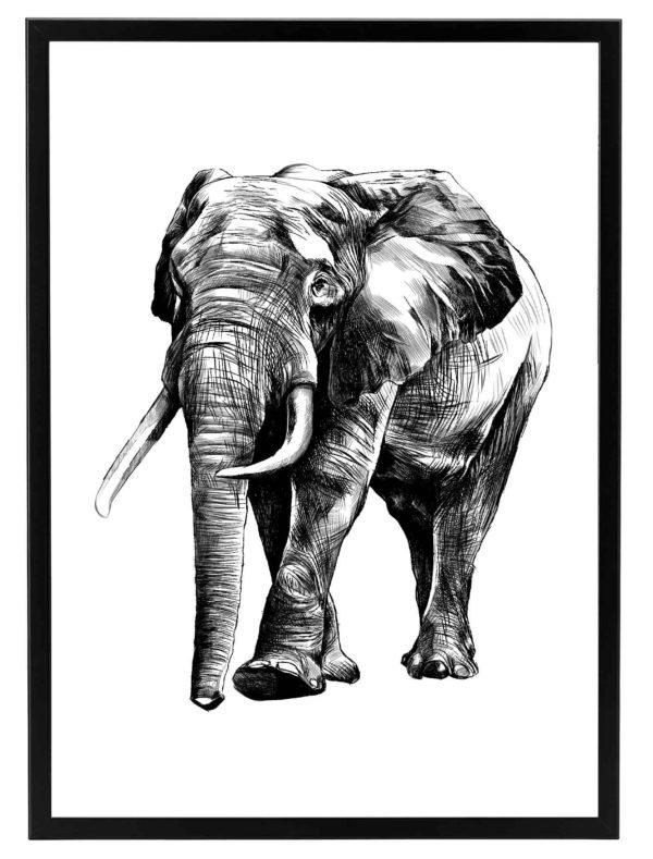 LAMINA-ELEPHANT-DRAW-MARCO-NEGRO