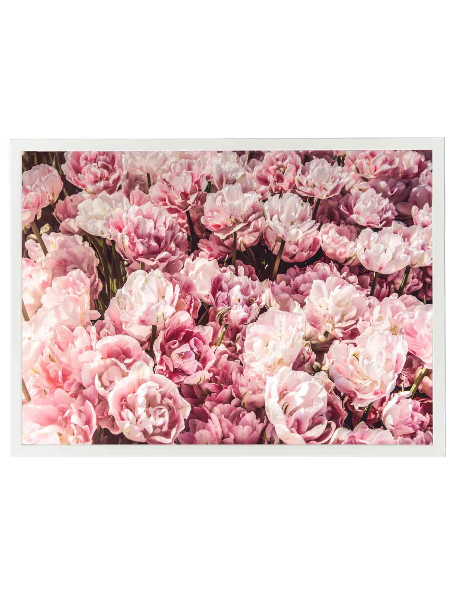 Lámina Flores Rosas Wasabi Project