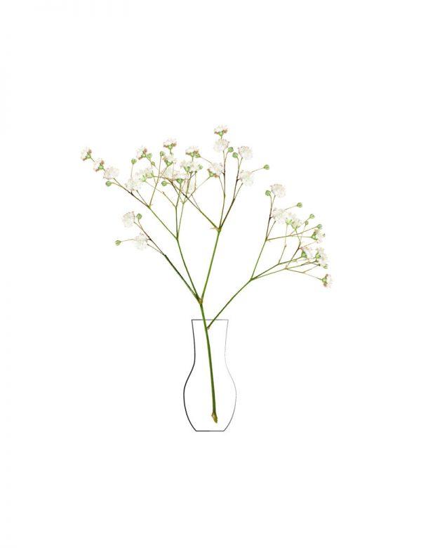 Lámina Flores Blancas