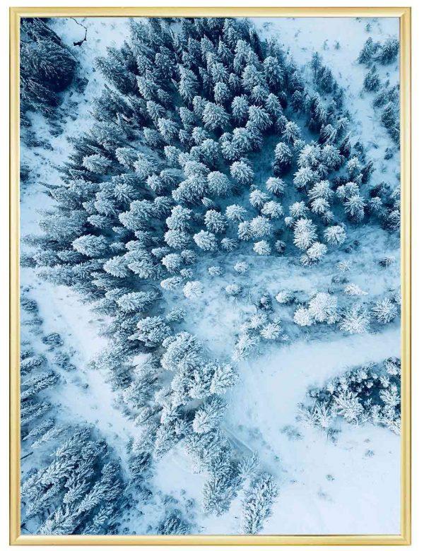LÁMINA-FOREST-SNOW-MARCO-DORADO