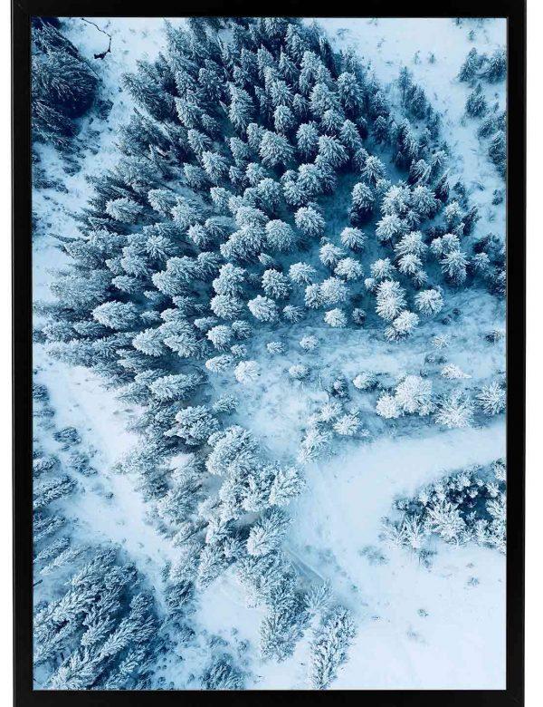 LÁMINA-FOREST-SNOW-MARCO-NEGRO