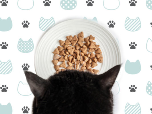 Domestic cat food. A black and white cat is eating food. Pet Care.