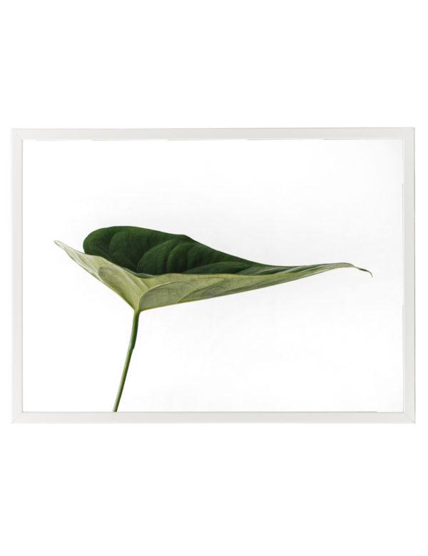 Lámina Hoja Verde en formato horizontal con marco blanco.