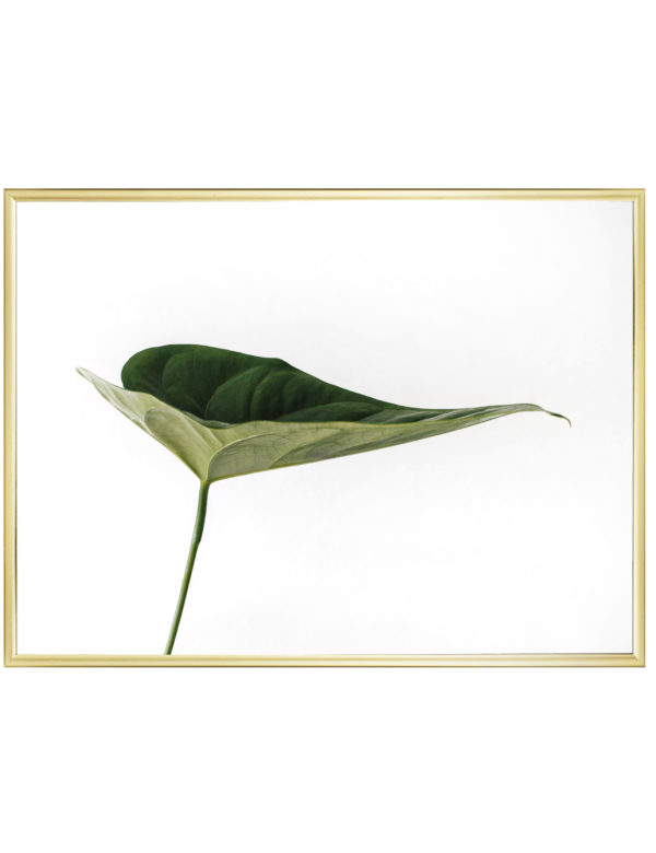 Lámina Hoja Verde en formato horizontal con marco dorado.