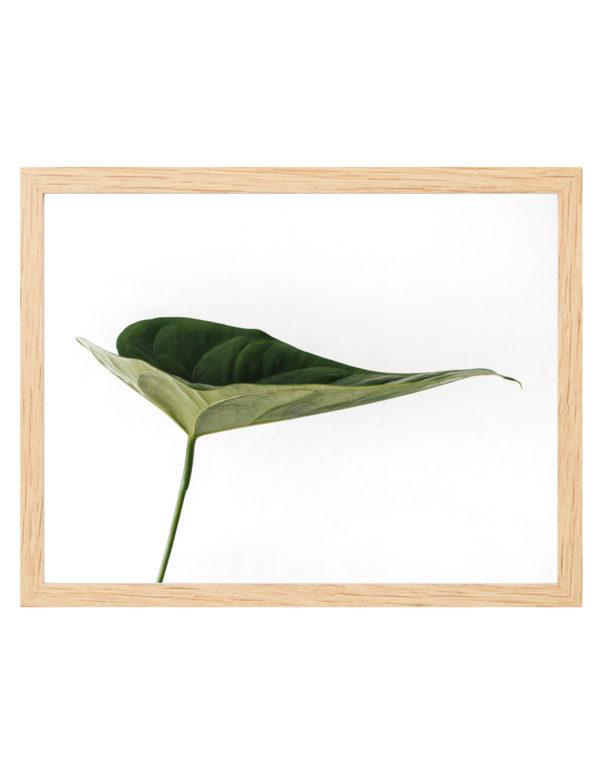 Lámina Hoja Verde en formato horizontal con marco madera.