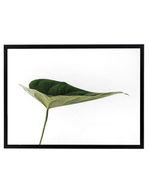 Lámina Hoja Verde en formato horizontal con marco negro.