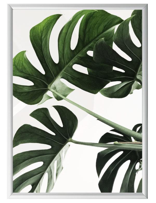 Lámina Planta Monstera con marco plateado