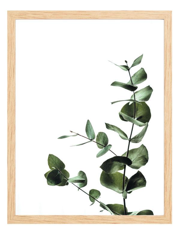 Lámina Rama con Hojas con marco de madera