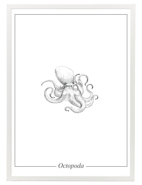 Lámina decorativa Ilustración Pulpo con marco blanco