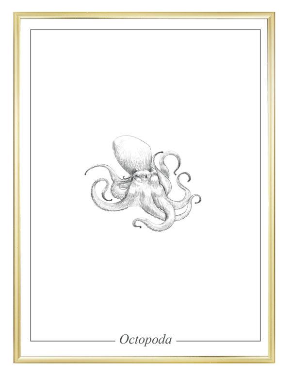 Lámina decorativa Ilustración Pulpo con marco dorado