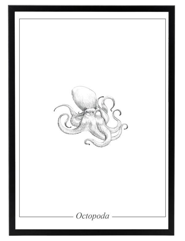 Lámina decorativa Ilustración Pulpo con marco negro