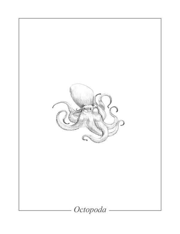 Lámina decorativa Ilustración Pulpo sin marco