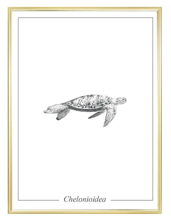 Lámina decortaiva Ilustración Tortuga con marco dorado