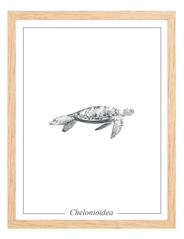 Lámina decortaiva Ilustración Tortuga con marco de madera