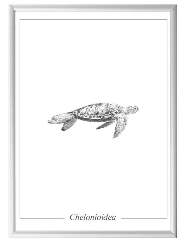 Lámina decortaiva Ilustración Tortuga con marco plateado