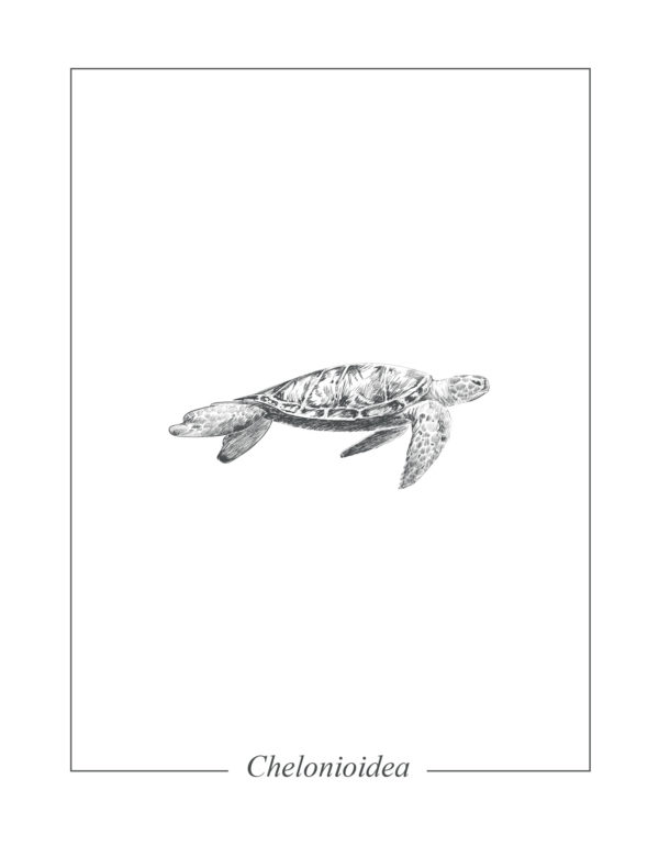 Lámina decortaiva Ilustración Tortuga sin marco